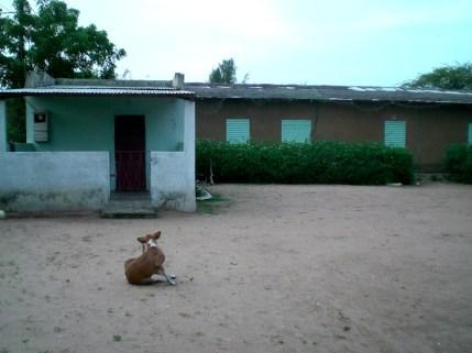 Un chien au Clep