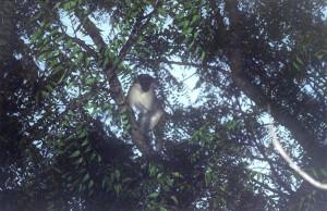 La faune de Bandiala