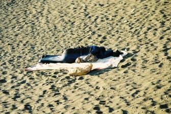 Premier dodo sur la plage