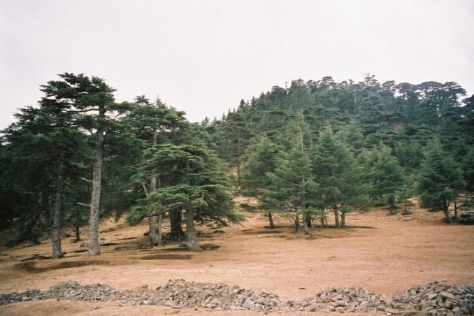 Forêt de cèdres dans le Rif