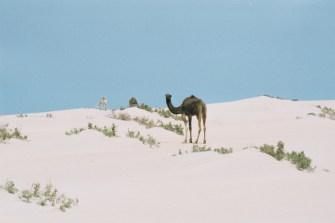 ma2002-09-sud-dromadaire