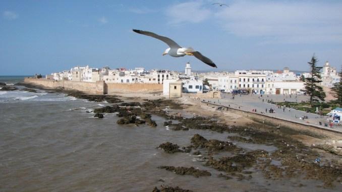 Une mouette plane au-dessus d'Essaouira