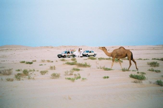 Rencontre dans le désert