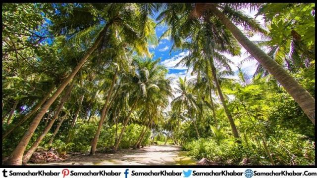 Benefits of Coconut Cultivation