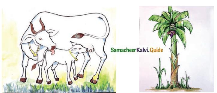 Samacheer Kalvi 8th Tamil Guide Chapter 8.5 யாப்பு இலக்கணம் 3