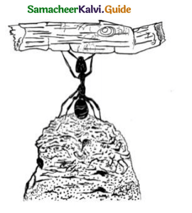 Samacheer Kalvi 9th Tamil Guide Chapter 2.6 துணைவினைகள் - 13