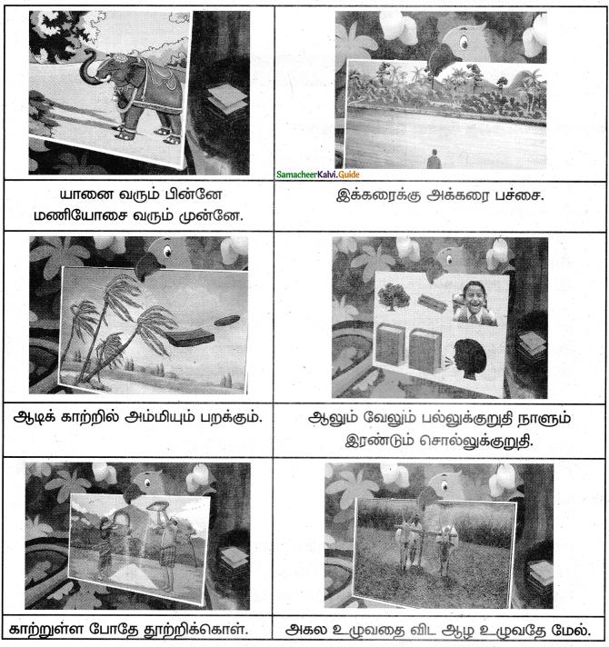 Samacheer Kalvi 5th Tamil Guide Chapter 3.2 படம் இங்கே! பழமொழி எங்கே? - 2