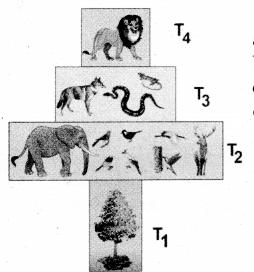Samacheer Kalvi 12th Bio Botany Guide Chapter 7 Ecosystem 01