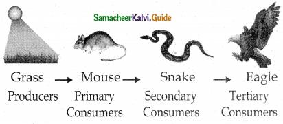 Samacheer Kalvi 12th Bio Botany Guide Chapter 7 Ecosystem 16