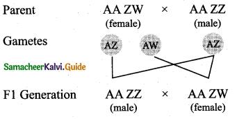 Samacheer Kalvi 12th Bio Zoology Guide Chapter 4 Principles of Inheritance and Variation 11