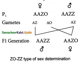 Samacheer Kalvi 12th Bio Zoology Guide Chapter 4 Principles of Inheritance and Variation 14