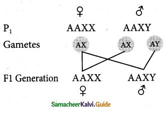 Samacheer Kalvi 12th Bio Zoology Guide Chapter 4 Principles of Inheritance and Variation 3