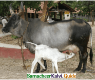 Samacheer Kalvi 4th English Guide Term 3 Supplementary 2 The wooden toy 1