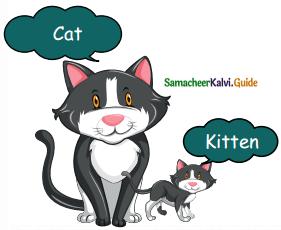 Samacheer Kalvi 5th English Guide Term 3 Prose Chapter 3 The Monster Tree 10