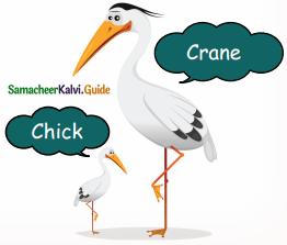 Samacheer Kalvi 5th English Guide Term 3 Prose Chapter 3 The Monster Tree 15