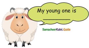 Samacheer Kalvi 5th English Guide Term 3 Prose Chapter 3 The Monster Tree 18