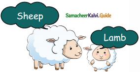 Samacheer Kalvi 5th English Guide Term 3 Prose Chapter 3 The Monster Tree 5