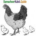 Samacheer Kalvi 5th English Guide Term 3 poem 2 The Dreamer 15
