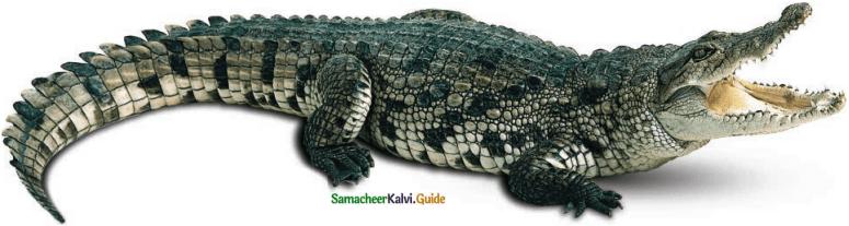 Samacheer Kalvi 6th English Guide Term 1 Poem 1 The Crocodile 2