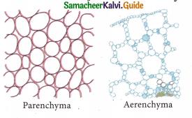 Samacheer Kalvi 9th Science Guide Chapter 18 Organization of Tissues 1