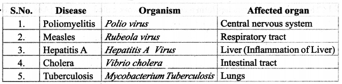 Samacheer Kalvi 9th Science Guide Chapter 22 World of Microbes 7