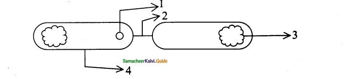 Samacheer Kalvi 11th Bio Botany Chapter 1 Living World 10