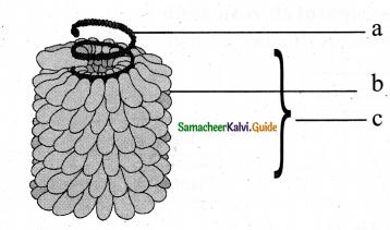 Samacheer Kalvi 11th Bio Botany Chapter 1 Living World 7