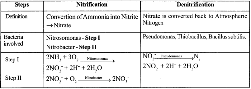 Samacheer Kalvi 11th Bio Botany Guide Chapter 12 Mineral Nutrition 11
