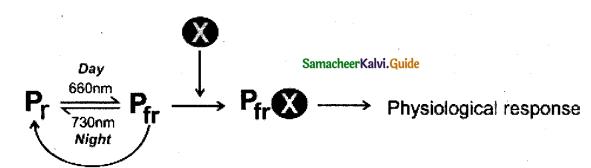 Samacheer Kalvi 11th Bio Botany Guide Chapter 15 Plant Growth and Development 14