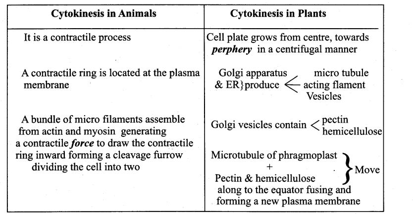 Samacheer Kalvi 11th Bio Botany Guide Chapter 7 Cell Cycle 1