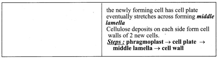 Samacheer Kalvi 11th Bio Botany Guide Chapter 7 Cell Cycle 2