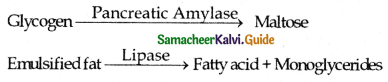 Samacheer Kalvi 11th Bio Zoology Guide Chapter 5 Digestion and Absorption 6