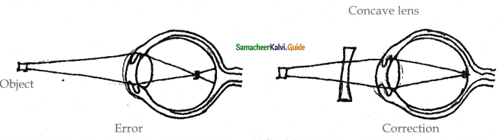 Samacheer Kalvi 11th Bio Zoology Guide Chapter 10 Neural Control and Coordination 26