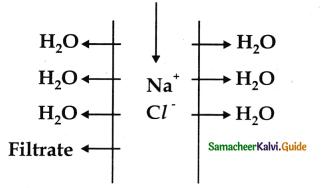 Samacheer Kalvi 11th Bio Zoology Guide Chapter 8 Excretion 7