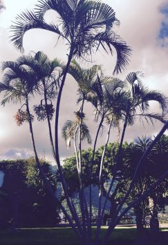 tall palm trees in tepoztlan mexico