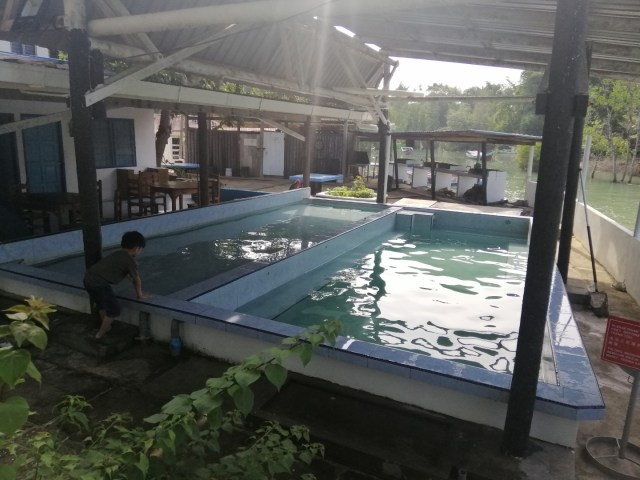 pandan goldcoast swimming pools