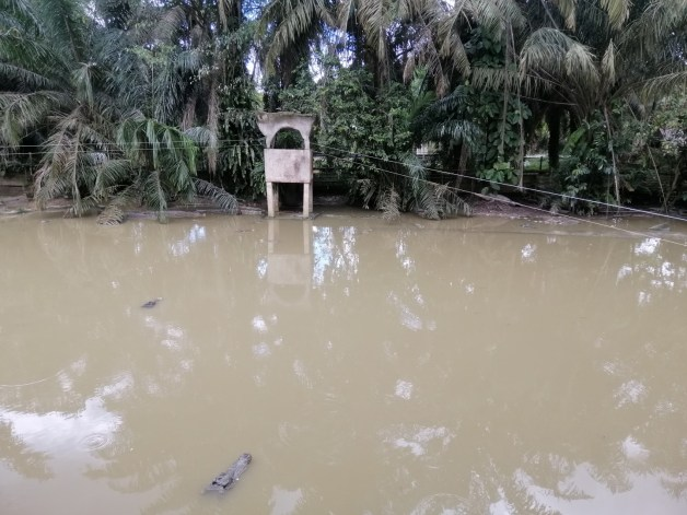 crocodile pond