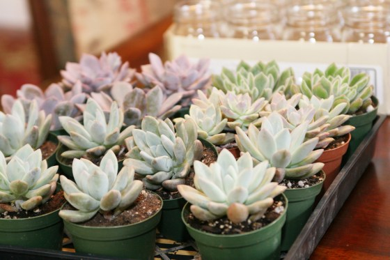 womens-luncheon-flourish-succulents_7578