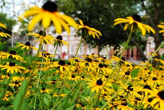 philadelphia-vacation-independence-hall-0499_2