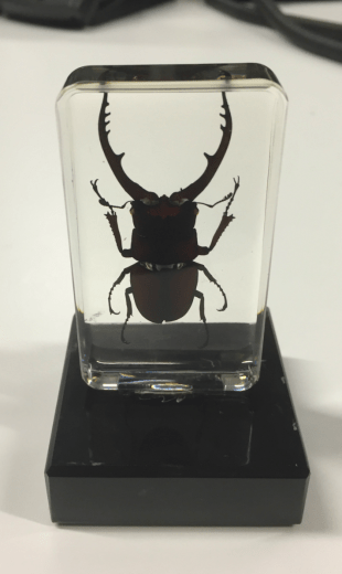 rhino bug in resin on a trophy base
