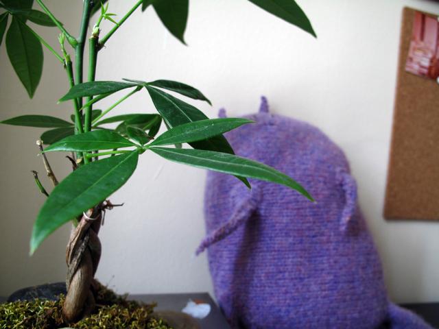 plant_purple