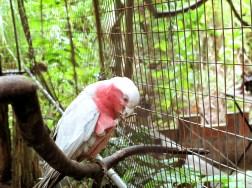 多左隻鸚鵡。係幾年前園主的朋友送的。