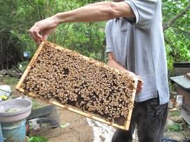 掀起一層一層的蜂巢...