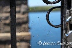 Quabbin Reservoir   © Samara Abramson