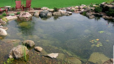 Pond like love