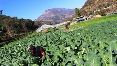 कृषि व्यवसाय गर्ने युवालाई बिनाधितो कर्जा