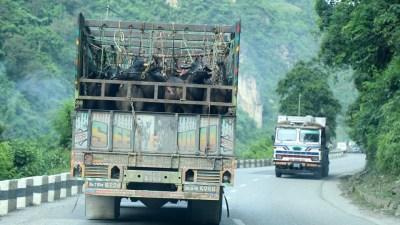 मापदण्डविपरीत पशु ढुवानी गर्ने ३६ सवारी कारवाहीमा