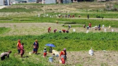 बेरोजगार किसानलाई कृषि र पशुपालनमार्फत आत्मनिर्भर बनाइने