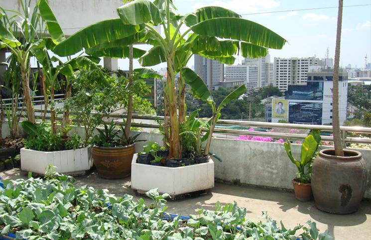 Creative Ideas To Make Your Balcony Garden More Attractive Sambad English