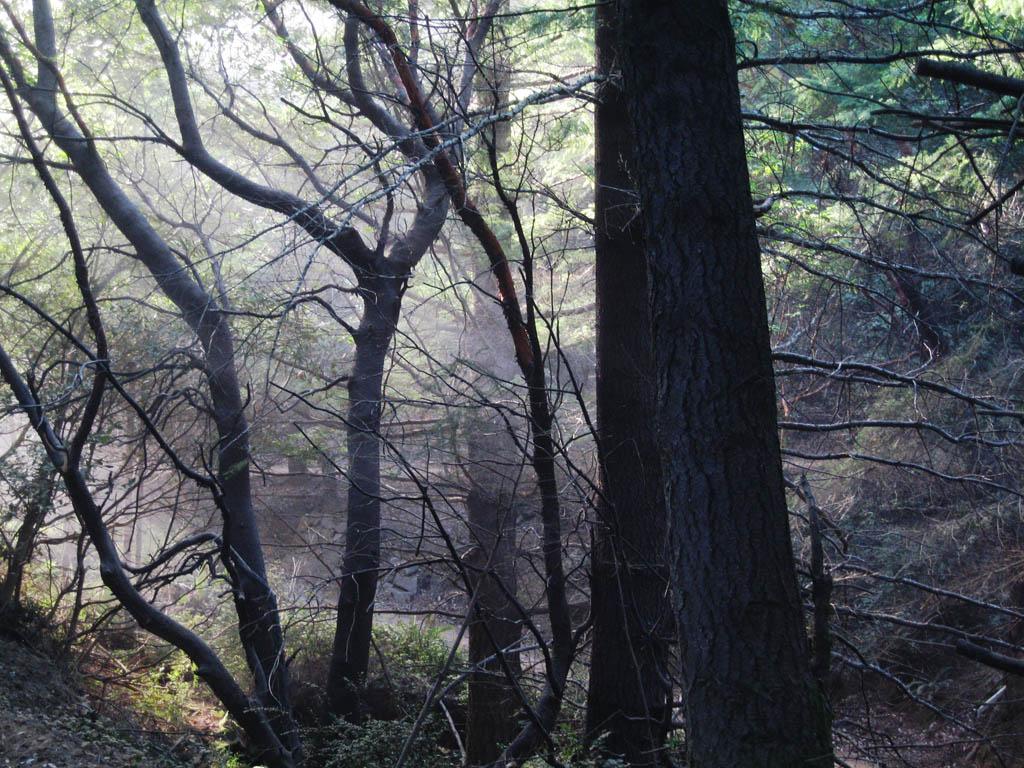 Through the Forest - Sinkyone